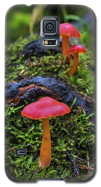 Galaxy S5 Case featuring the photograph Woodland Floor Decor by Bill Pevlor