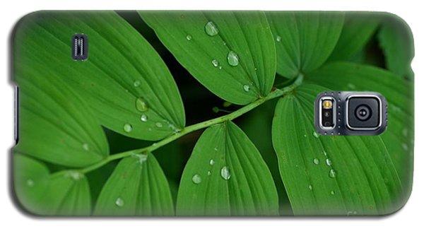 Woodland Rain Galaxy S5 Case by Tim Good
