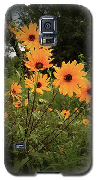 Galaxy S5 Case featuring the photograph Woodland Sunflower by Scott Kingery