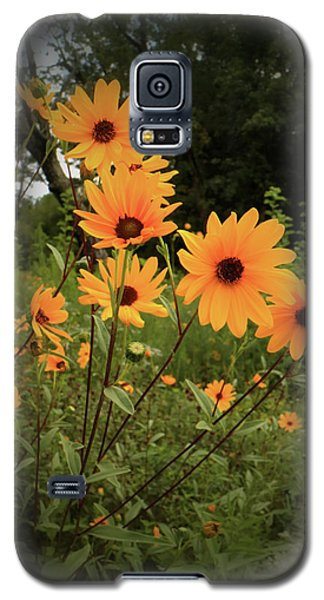 Woodland Sunflower Galaxy S5 Case by Scott Kingery
