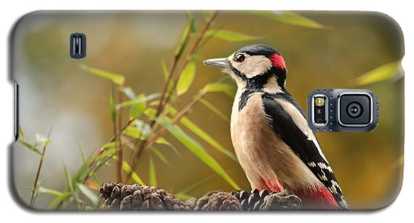 Woodpecker 3 Galaxy S5 Case