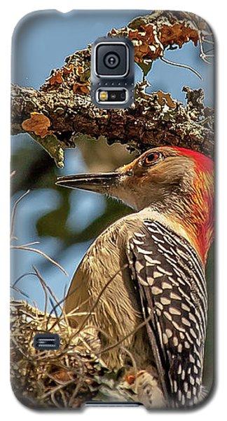 Woodpecker Closeup Galaxy S5 Case