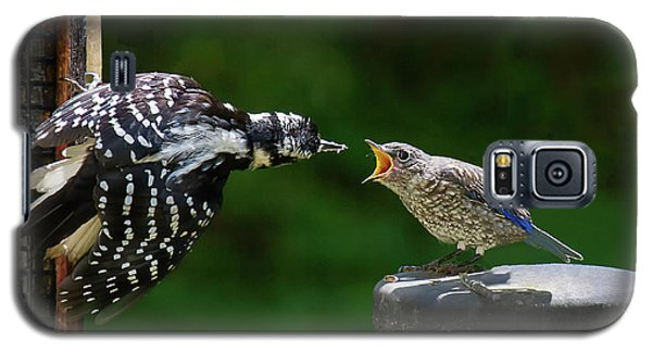 Woodpecker Feeding Bluebird Galaxy S5 Case by Robert L Jackson