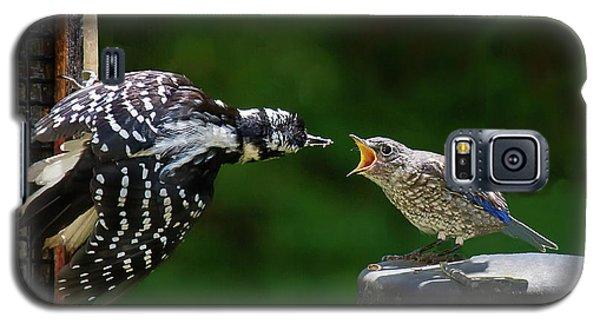 Woodpecker Feeding Bluebird Galaxy S5 Case