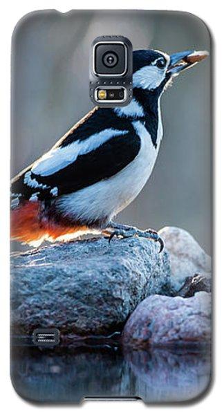 Woodpecker In Backlight Galaxy S5 Case