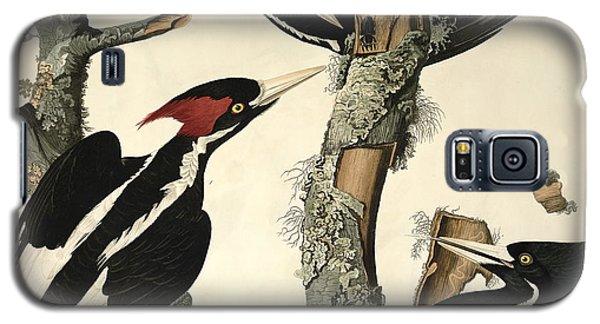 Audubon Galaxy S5 Case - Woodpecker by John James Audubon