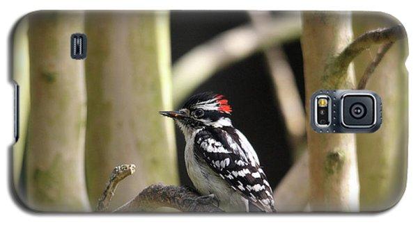 Downy Woodpecker Galaxy S5 Case