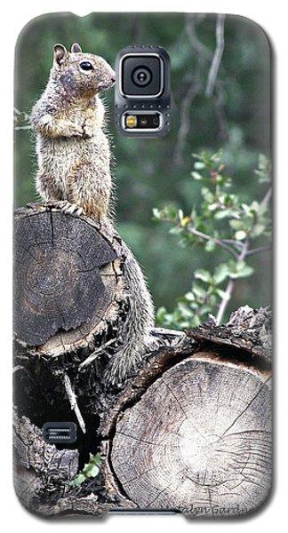 Woodpile Squirrel Galaxy S5 Case
