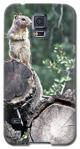 Woodpile Squirrel Galaxy S5 Case