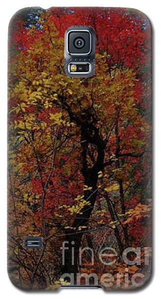 Woods In Oak Creek Canyon, Arizona Galaxy S5 Case