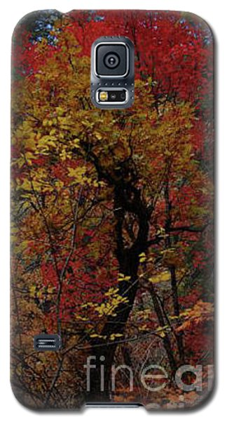 Woods In Oak Creek Canyon, Arizona Galaxy S5 Case