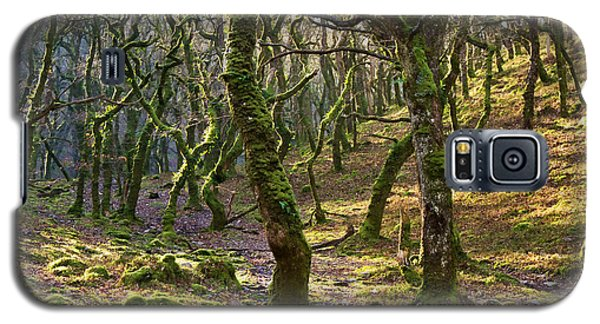 Woods Near Badgeworthy Water Exmoor Galaxy S5 Case