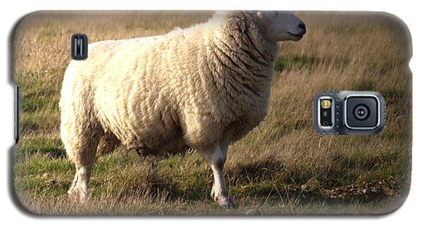 Sheep Galaxy S5 Case - Woolly Coat by Sharon Lisa Clarke