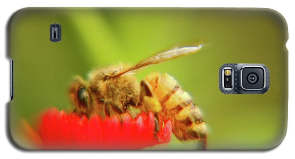 Galaxy S5 Case featuring the photograph Worker Bee by Micah May