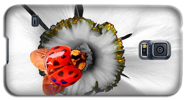 Wow Ladybug Is Hot Today Galaxy S5 Case