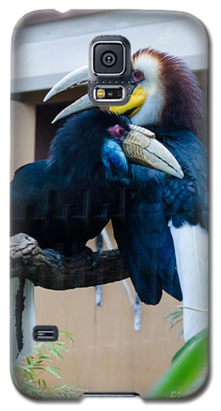 Wreathed Hornbills Galaxy S5 Case by Donna Brown