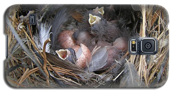 Galaxy S5 Case featuring the photograph Wren Babies by Angie Rea