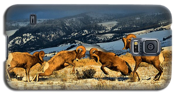Galaxy S5 Case featuring the photograph Wyoming Bighorn Brawl by Adam Jewell