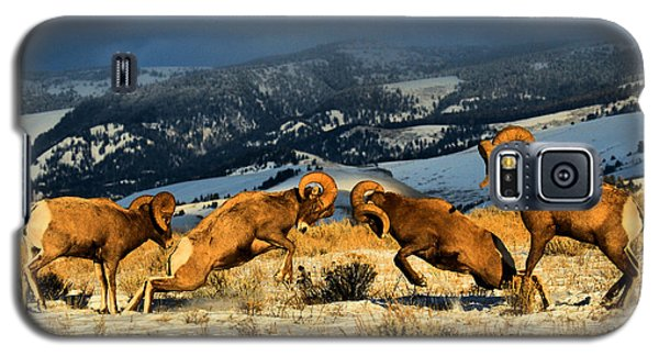 Wyoming Bighorn Brawl Galaxy S5 Case
