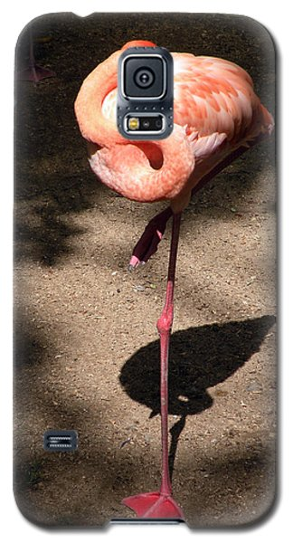 Galaxy S5 Case featuring the photograph Xcaret Mexico Sleeping Flamingo by Dianne Levy