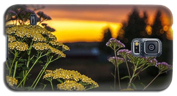 Yarrow At Sunset Galaxy S5 Case