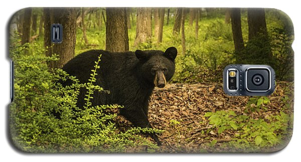 Yearling Black Bear Galaxy S5 Case