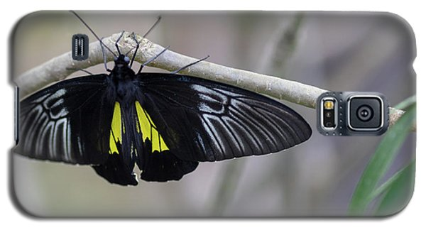 Yellow And Black Butterfly Galaxy S5 Case