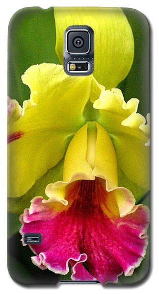 Yellow And Pink Cattleya Orchid Galaxy S5 Case