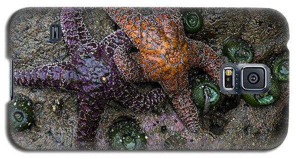 Orange And Purple Starfish II Galaxy S5 Case by Chuck Flewelling