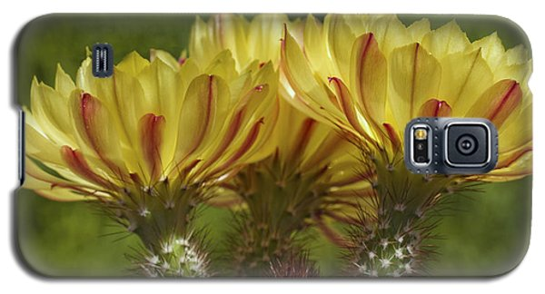 Yellow And Red Cactus Flowers Galaxy S5 Case