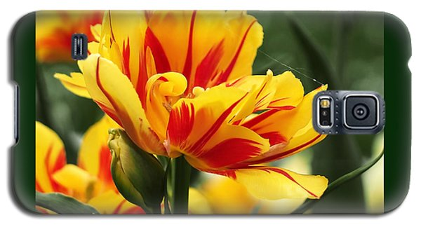 Yellow And Red Triumph Tulips Galaxy S5 Case by Rona Black