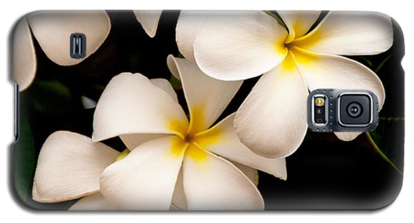 Yellow And White Plumeria Galaxy S5 Case