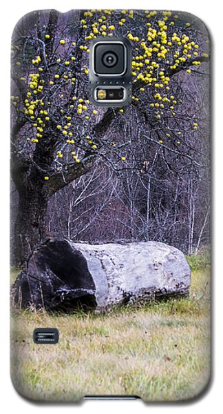 Yellow Apples Galaxy S5 Case