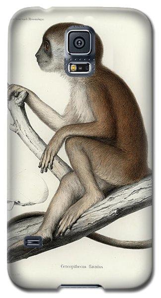 Yellow Baboon, Papio Cynocephalus Galaxy S5 Case