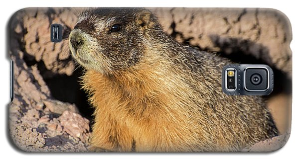 Yellow-bellied Marmot - Capitol Reef National Park Galaxy S5 Case by Gary Whitton