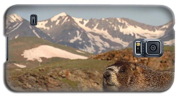 Yellow-bellied Marmot In Mountain Meditation Galaxy S5 Case by Max Allen