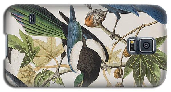 Yellow-billed Magpie Stellers Jay Ultramarine Jay Clark's Crow Galaxy S5 Case