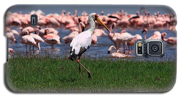 Yellow Billed Stork Galaxy S5 Case