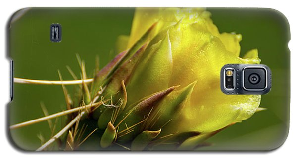 Yellow Cactus Flower Galaxy S5 Case