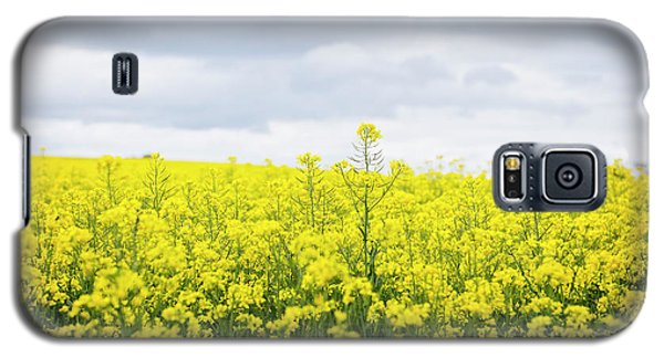 Galaxy S5 Case featuring the photograph Yellow Canopies by Ivy Ho