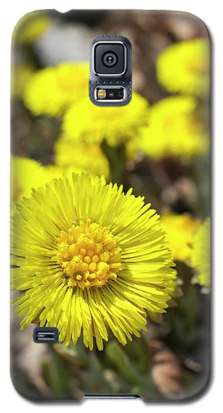 Galaxy S5 Case featuring the photograph Yellow Coltsfoot Flowers by Christina Rollo