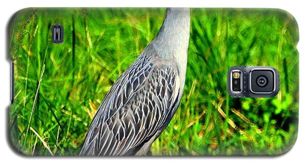 Yellow Crested Night Heron Catches A Fiddler Crab Galaxy S5 Case by Barbara Bowen