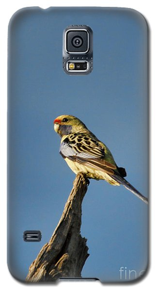 Galaxy S5 Case featuring the photograph Yellow Crimson Rosella by Douglas Barnard