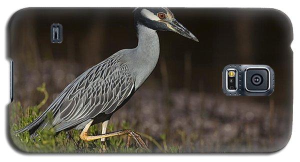 Yellow-crowned Night Heron Galaxy S5 Case