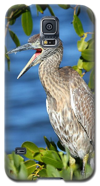 Galaxy S5 Case featuring the photograph Yellow-crowned Night Heron by Jennifer Zelik