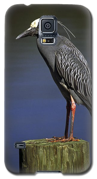 Galaxy S5 Case featuring the photograph Yellow-crowned Night Heron by Sally Weigand