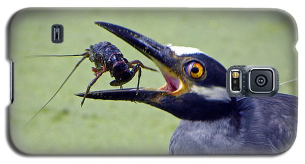 Galaxy S5 Case featuring the photograph Yellow Crowned Night Heron  by Savannah Gibbs