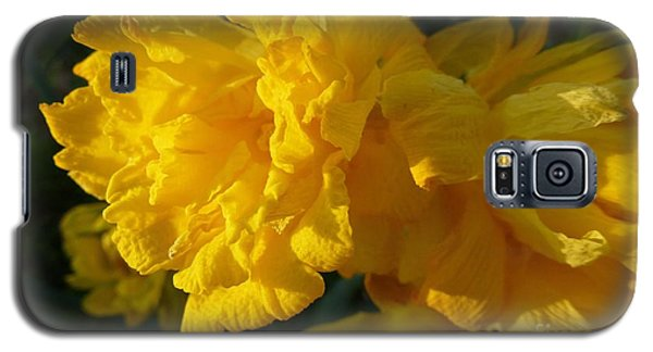 Yellow Daffodils Galaxy S5 Case by Jean Bernard Roussilhe