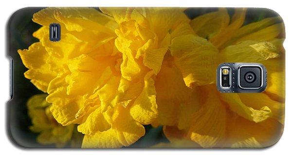 Yellow Daffodils Galaxy S5 Case