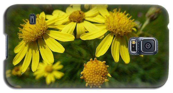 Yellow Daisies 2 Galaxy S5 Case